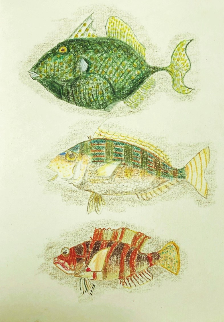 Sketch of 'Australian fishes' originally by J.B. Emery, by Anne Marie Sinclair