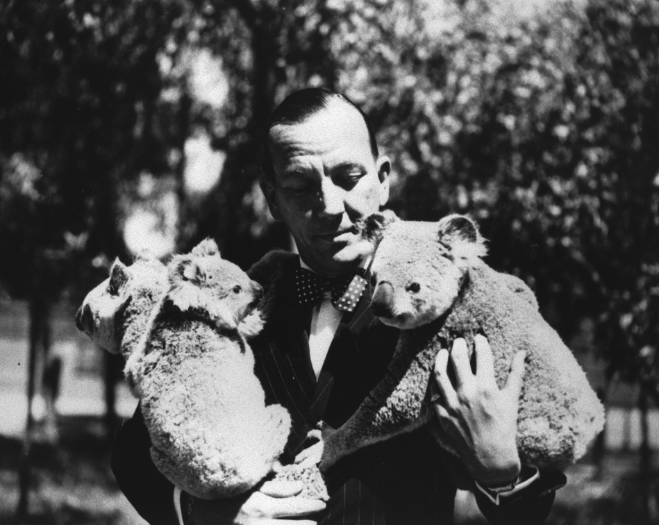 Noel Coward at the Koala Farm [B 61595]
