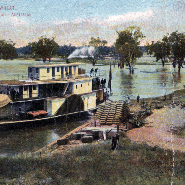 PS Marion on the River Murray [B 428]
